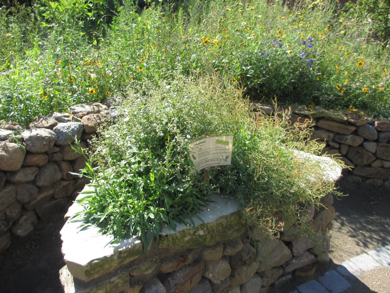 Lebensraum Garten Führung Durch Den Hofgarten